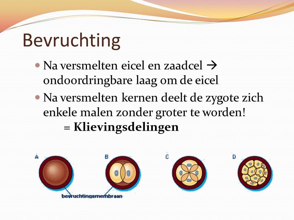 Bevruchting Na versmelten eicel en zaadcel  ondoordringbare laag om de eicel.