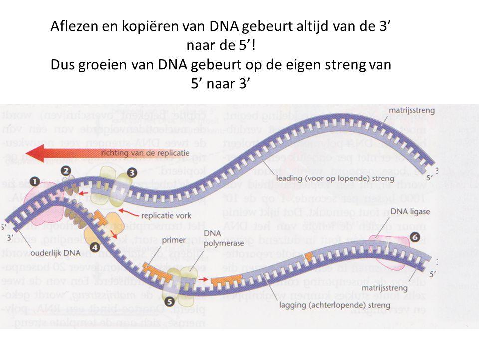 Aflezen en kopiëren van DNA gebeurt altijd van de 3' naar de 5'!