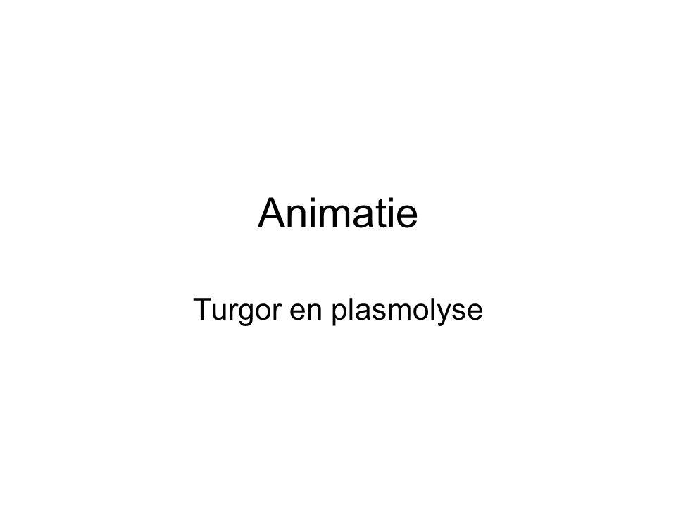 Animatie Turgor en plasmolyse