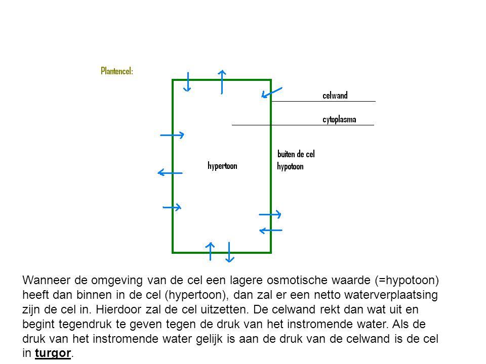 Wanneer de omgeving van de cel een lagere osmotische waarde (=hypotoon) heeft dan binnen in de cel (hypertoon), dan zal er een netto waterverplaatsing zijn de cel in.