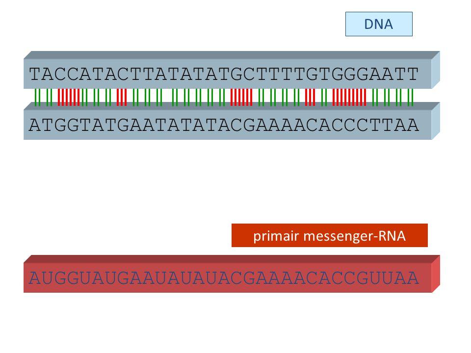 primair messenger-RNA