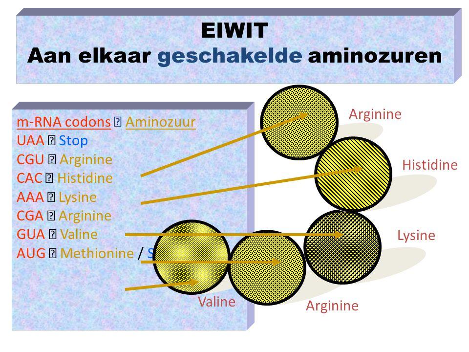 Aan elkaar geschakelde aminozuren