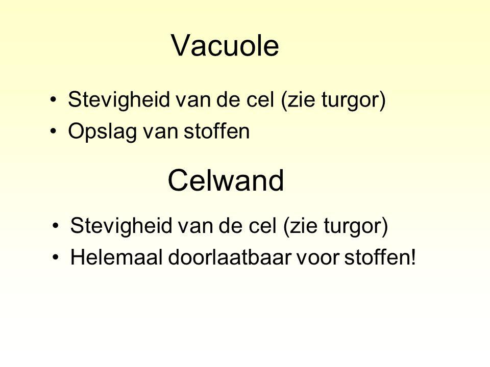 Vacuole Celwand Stevigheid van de cel (zie turgor) Opslag van stoffen