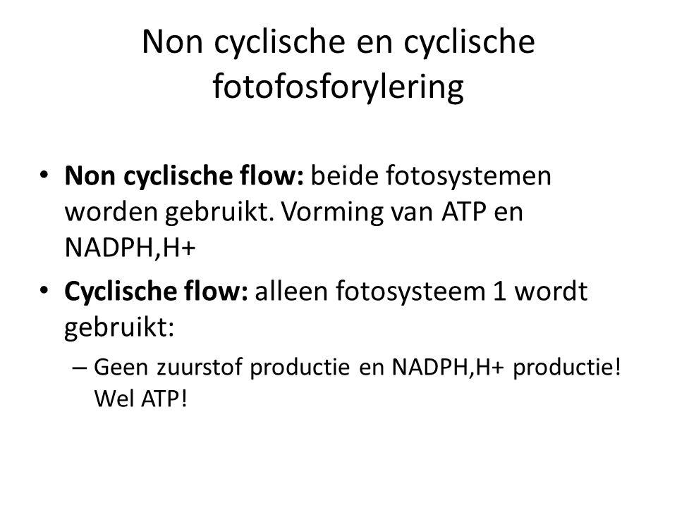 Non cyclische en cyclische fotofosforylering