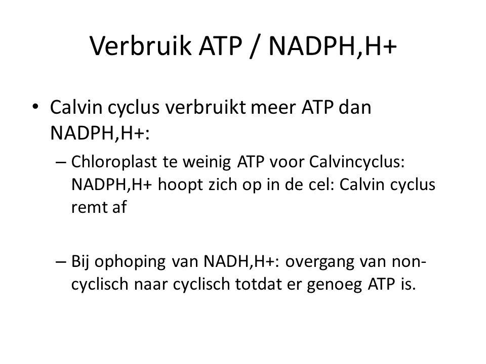 Verbruik ATP / NADPH,H+ Calvin cyclus verbruikt meer ATP dan NADPH,H+: