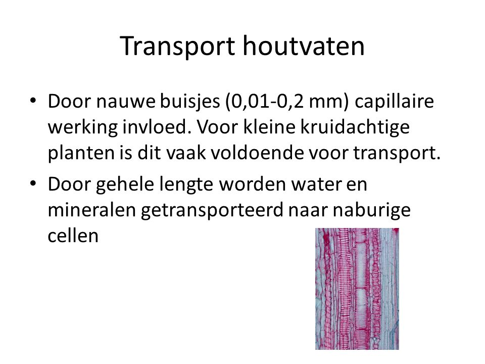 Transport houtvaten