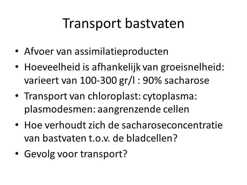 Transport bastvaten Afvoer van assimilatieproducten