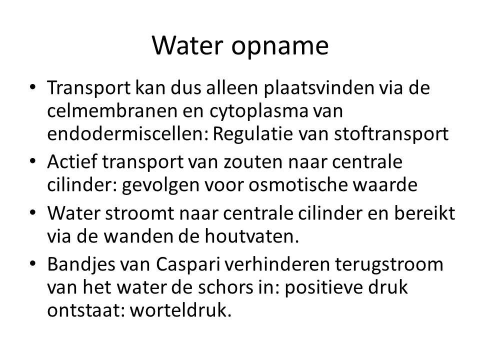 Water opname Transport kan dus alleen plaatsvinden via de celmembranen en cytoplasma van endodermiscellen: Regulatie van stoftransport.