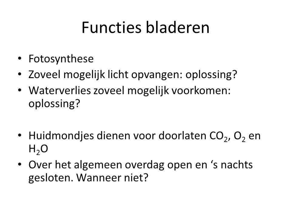 Functies bladeren Fotosynthese