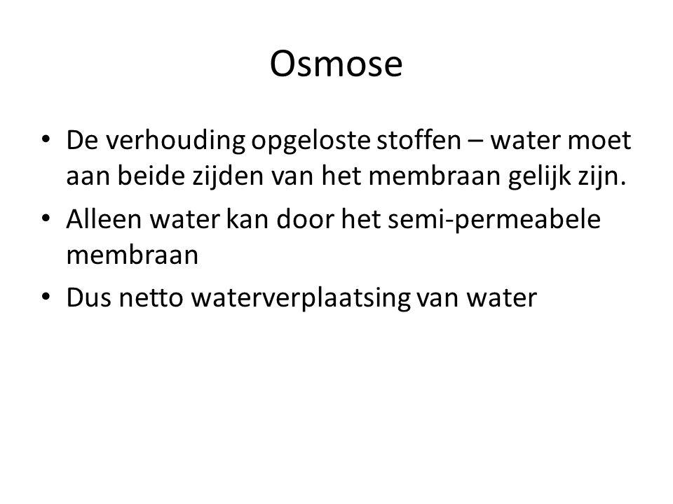 Osmose De verhouding opgeloste stoffen – water moet aan beide zijden van het membraan gelijk zijn.