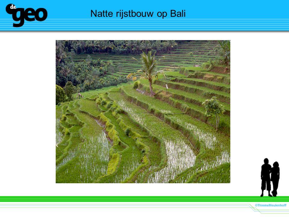 Natte rijstbouw op Bali