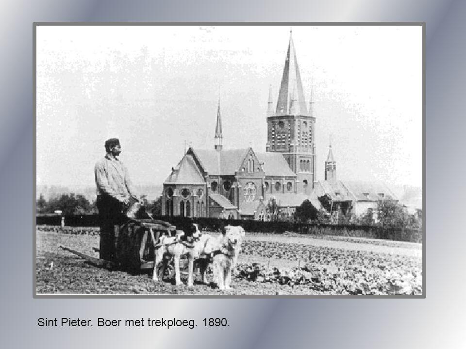 Sint Pieter. Boer met trekploeg. 1890.
