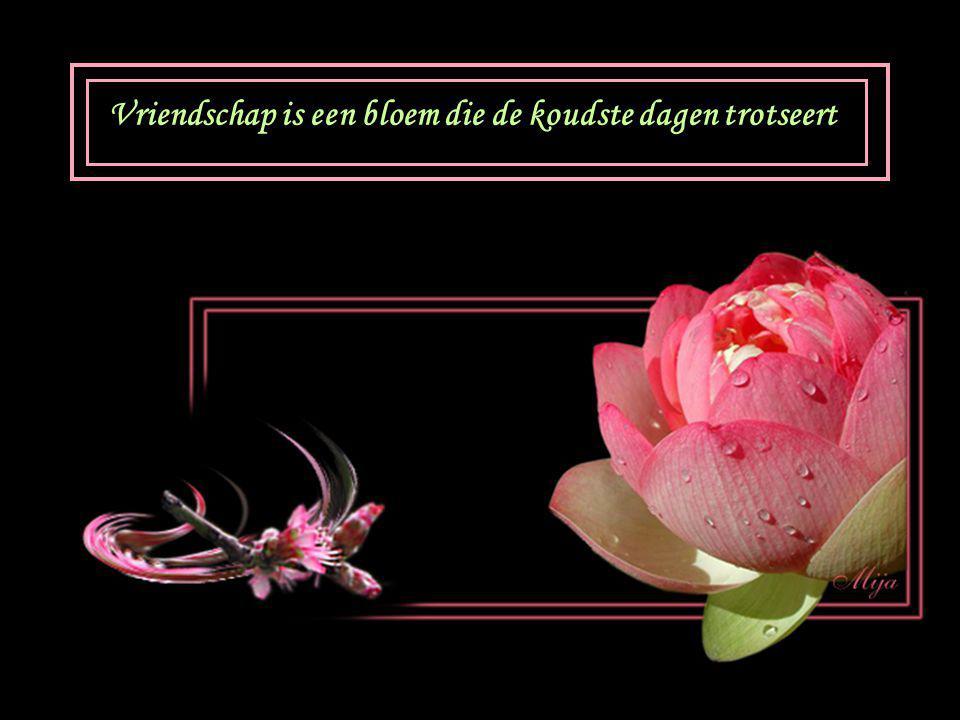 Vriendschap is een bloem die de koudste dagen trotseert