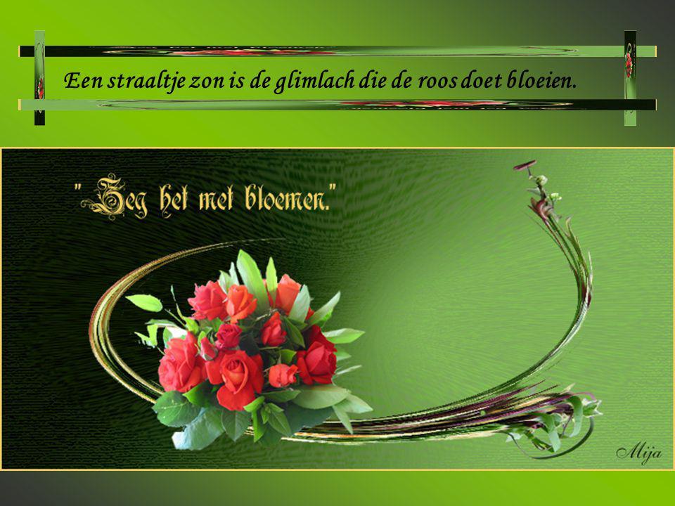 Een straaltje zon is de glimlach die de roos doet bloeien.