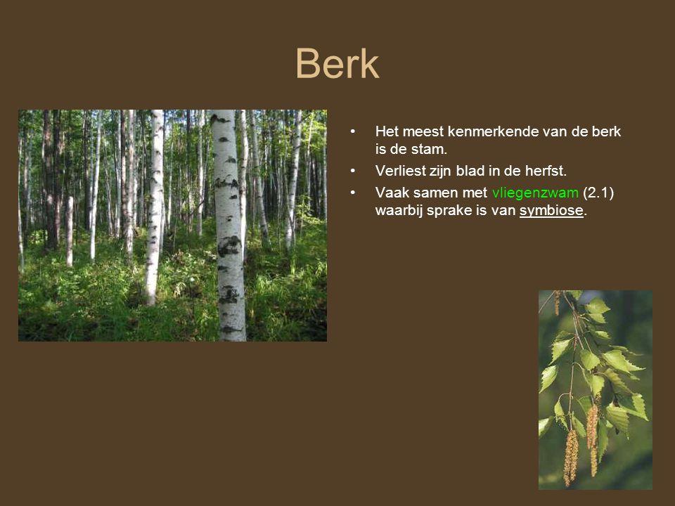 Berk Het meest kenmerkende van de berk is de stam.