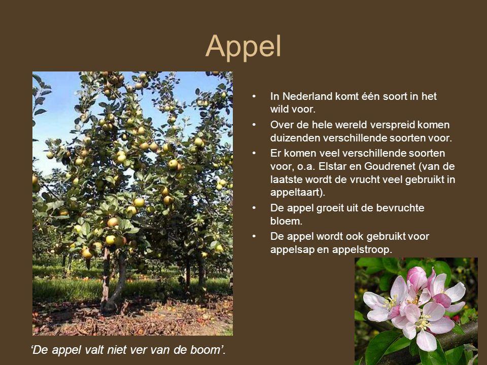 Appel 'De appel valt niet ver van de boom'.