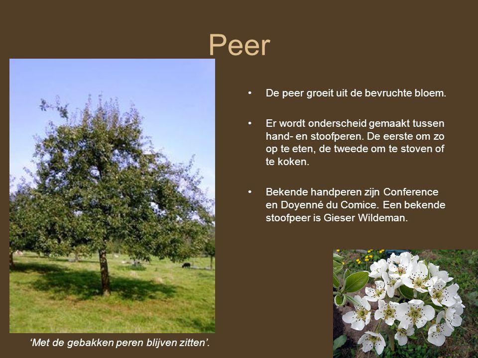 Peer De peer groeit uit de bevruchte bloem.