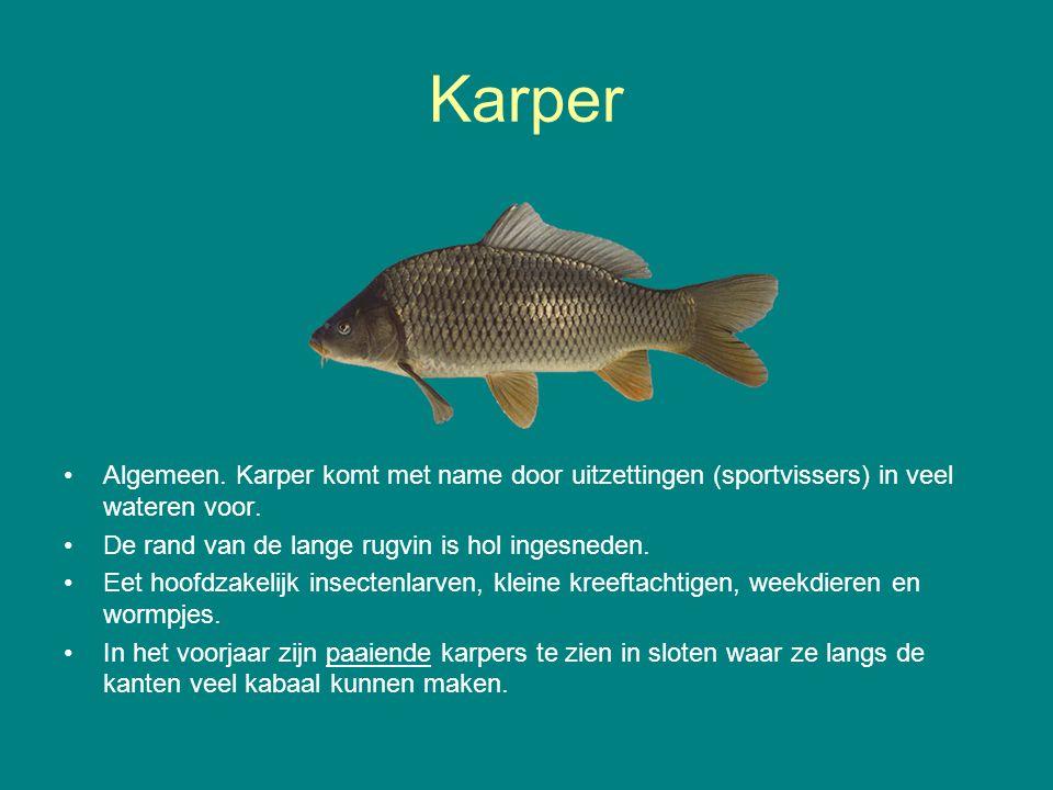 Karper Algemeen. Karper komt met name door uitzettingen (sportvissers) in veel wateren voor. De rand van de lange rugvin is hol ingesneden.