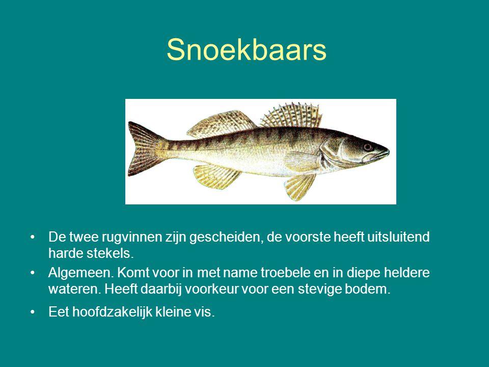 Snoekbaars De twee rugvinnen zijn gescheiden, de voorste heeft uitsluitend harde stekels.