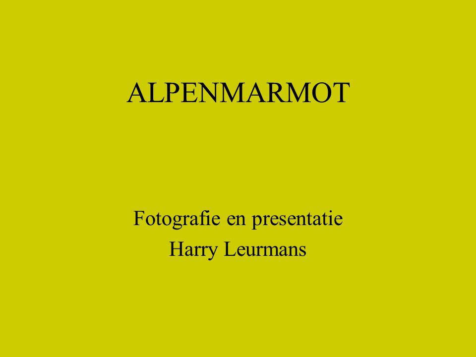 Fotografie en presentatie Harry Leurmans