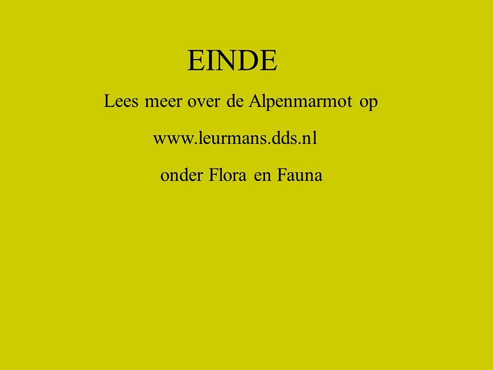 EINDE Lees meer over de Alpenmarmot op www.leurmans.dds.nl