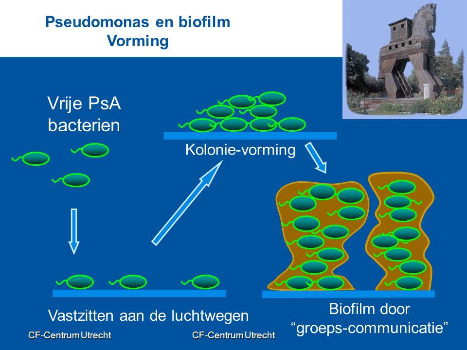 Pseudomonas en biofilm Vorming