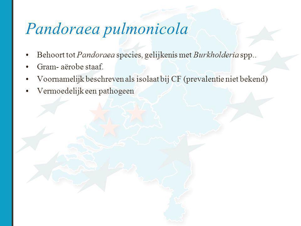 Pandoraea pulmonicola