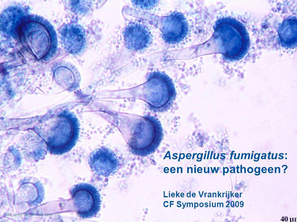 Aspergillus fumigatus: een nieuw pathogeen