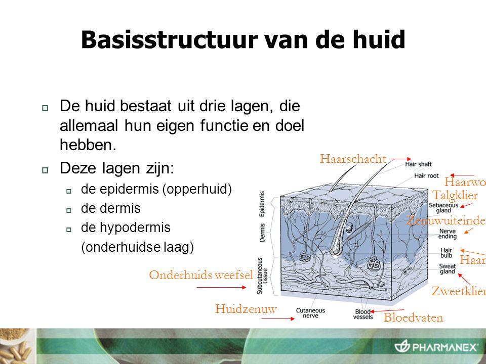 Basisstructuur van de huid