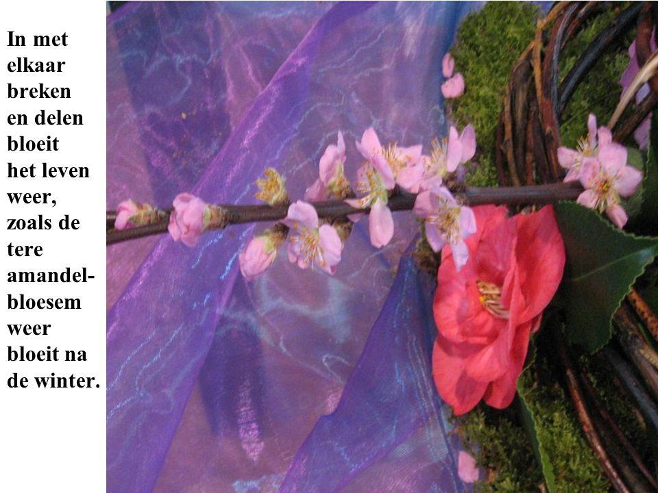 een In met elkaar breken en delen bloeit het leven weer, zoals de tere