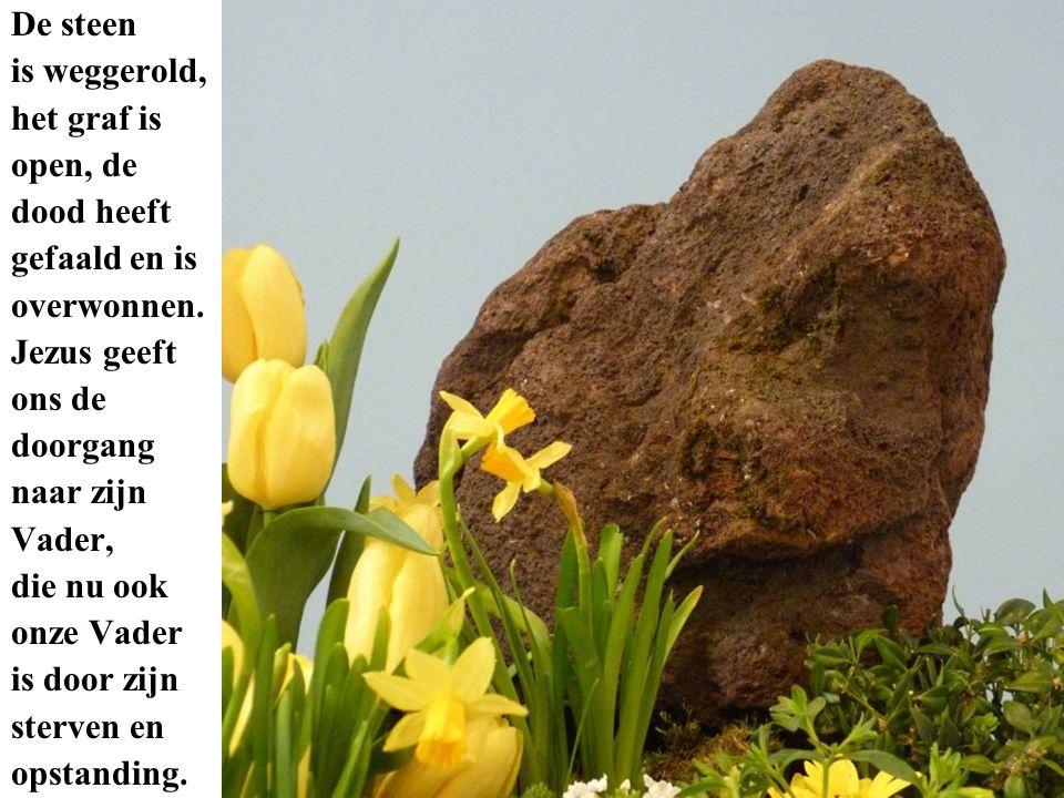 De steen is weggerold, het graf is. open, de. dood heeft. gefaald en is. overwonnen. Jezus geeft.