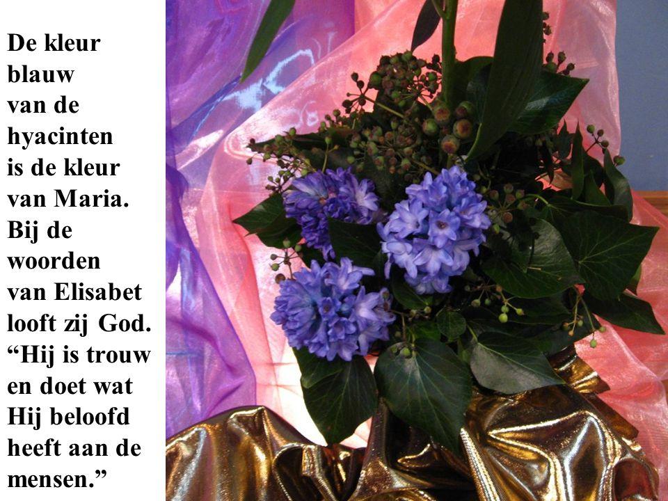 De kleur blauw van de hyacinten is de kleur van Maria
