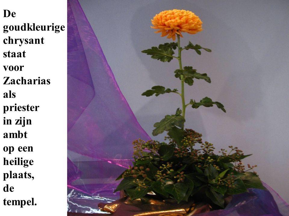 De goudkleurige chrysant staat voor Zacharias als priester in zijn ambt op een heilige plaats, de tempel.