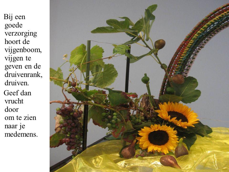 Bij een goede verzorging hoort de vijgenboom, vijgen te geven en de druivenrank, druiven.