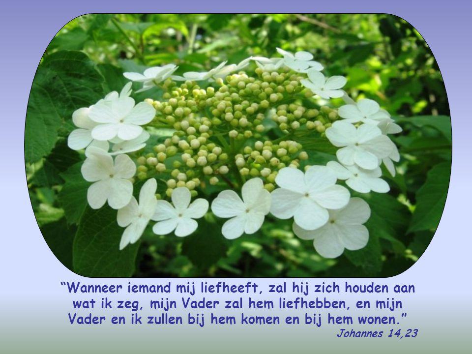 Wanneer iemand mij liefheeft, zal hij zich houden aan wat ik zeg, mijn Vader zal hem liefhebben, en mijn Vader en ik zullen bij hem komen en bij hem wonen.