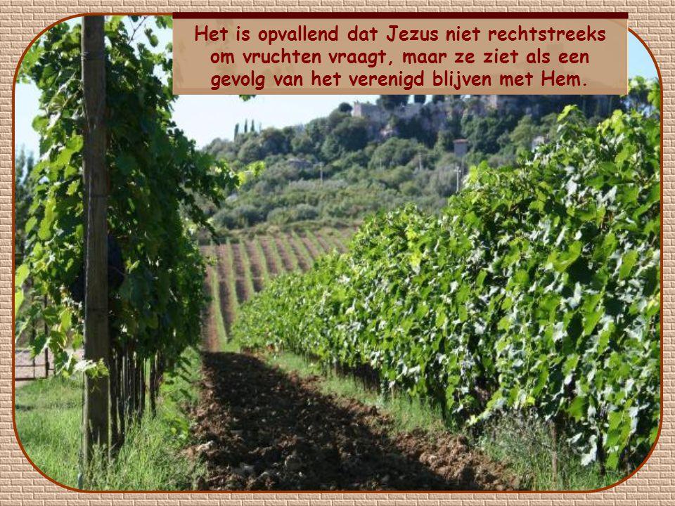Het is opvallend dat Jezus niet rechtstreeks om vruchten vraagt, maar ze ziet als een gevolg van het verenigd blijven met Hem.
