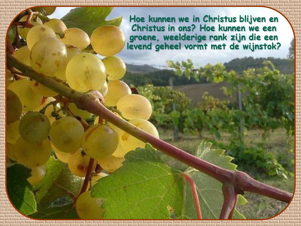 Hoe kunnen we in Christus blijven en Christus in ons