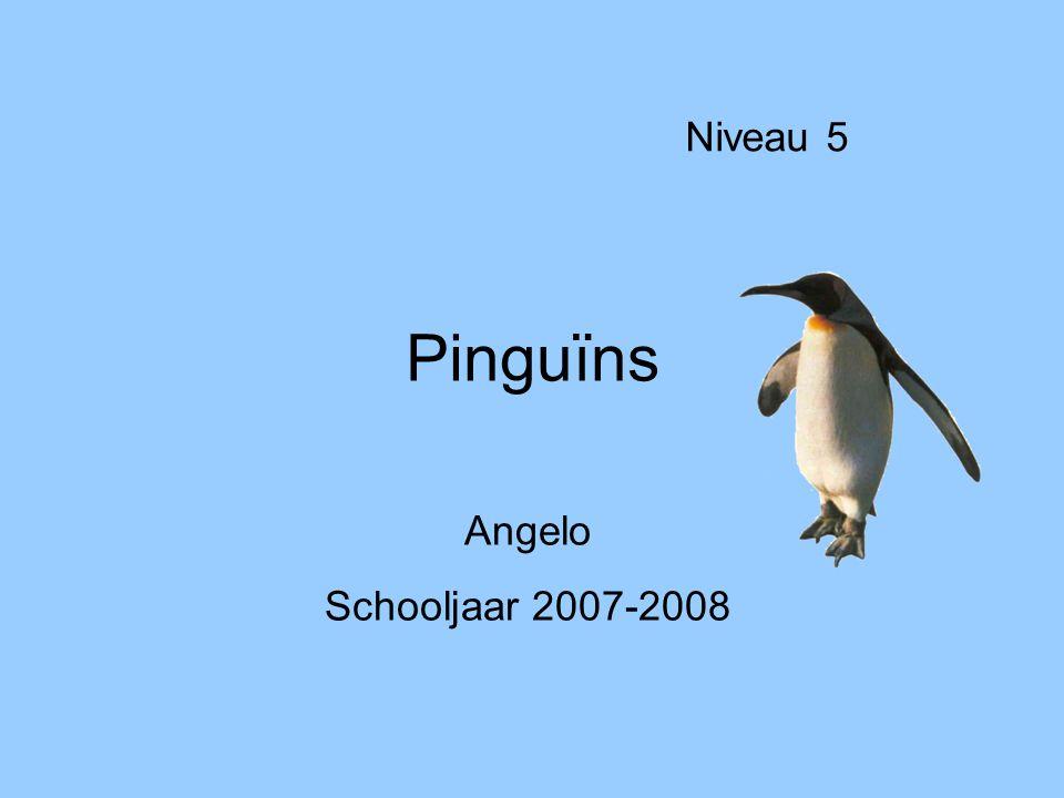 Niveau 5 Pinguïns Angelo Schooljaar 2007-2008