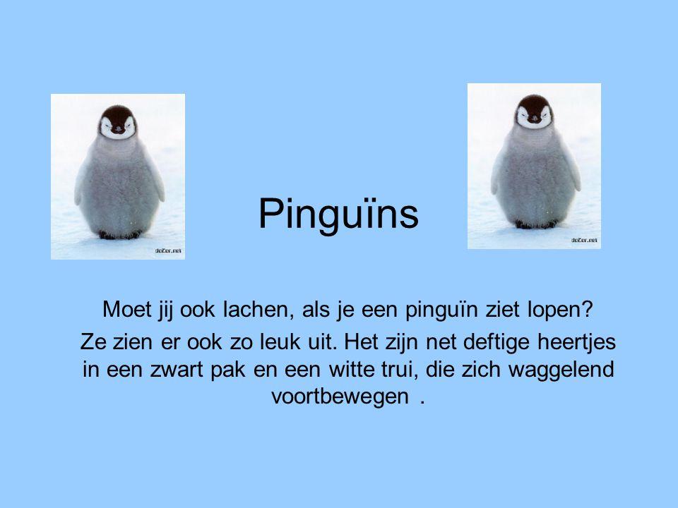Moet jij ook lachen, als je een pinguïn ziet lopen