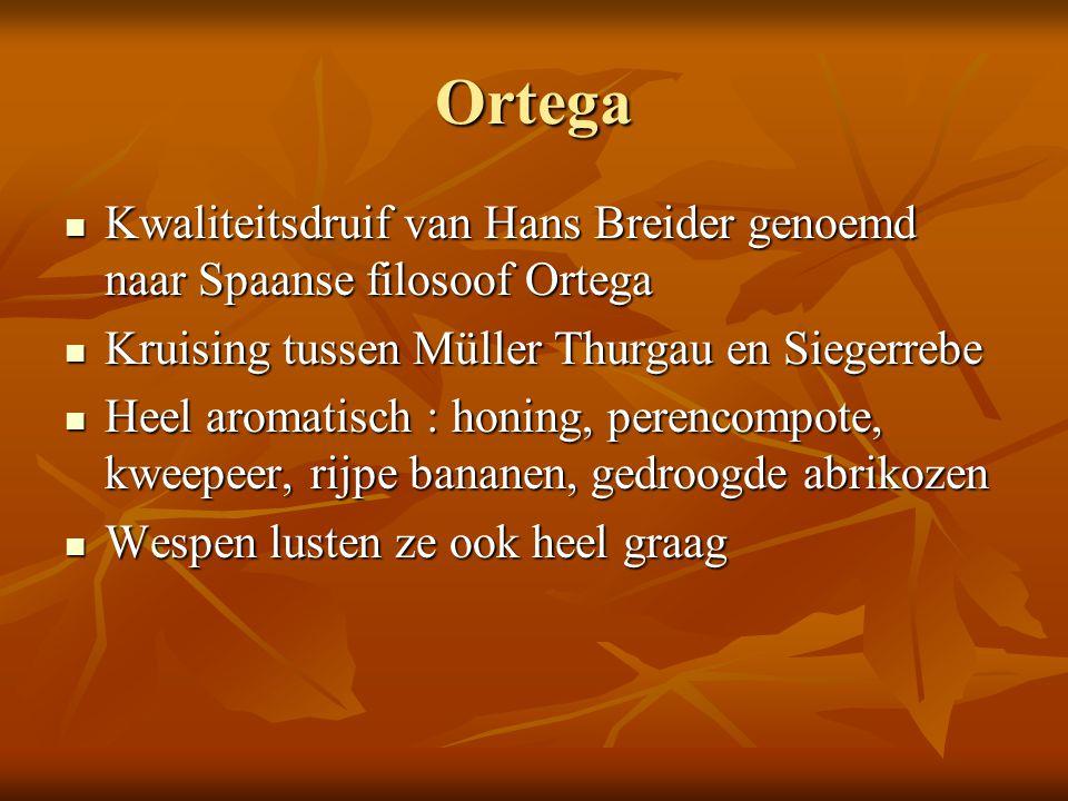 Ortega Kwaliteitsdruif van Hans Breider genoemd naar Spaanse filosoof Ortega. Kruising tussen Müller Thurgau en Siegerrebe.