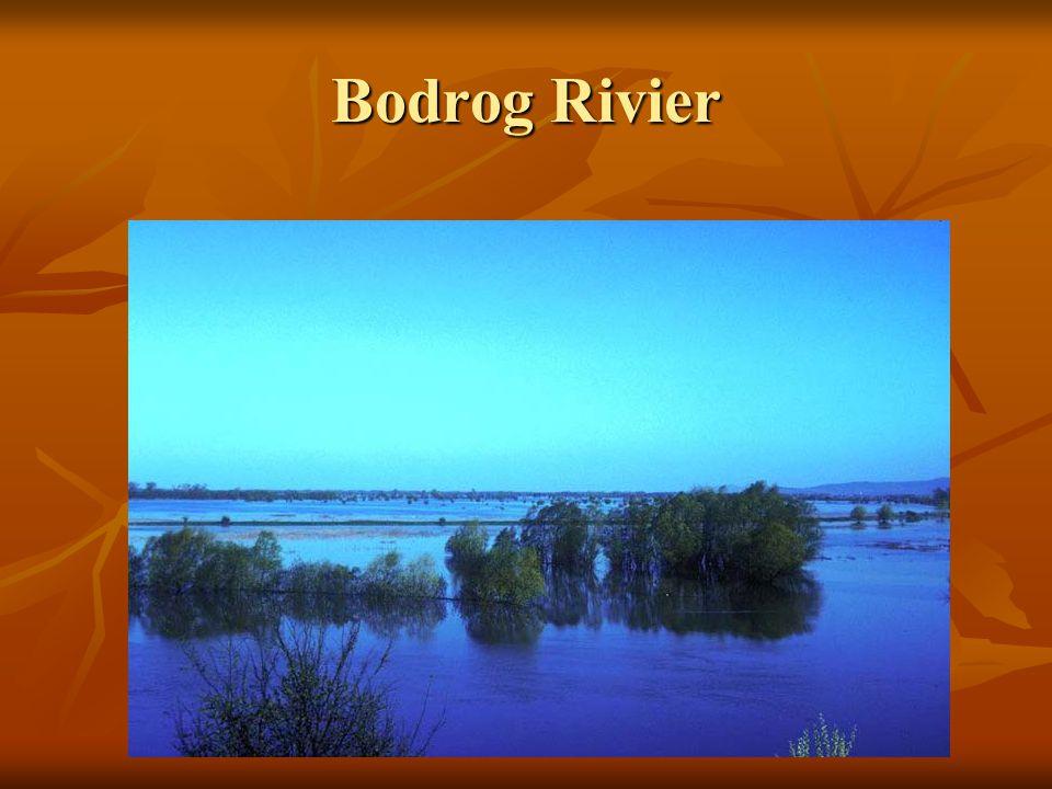 Bodrog Rivier