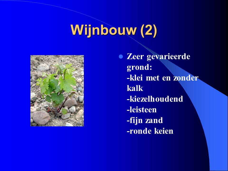 Wijnbouw (2) Zeer gevarieerde grond: -klei met en zonder kalk -kiezelhoudend -leisteen -fijn zand -ronde keien.