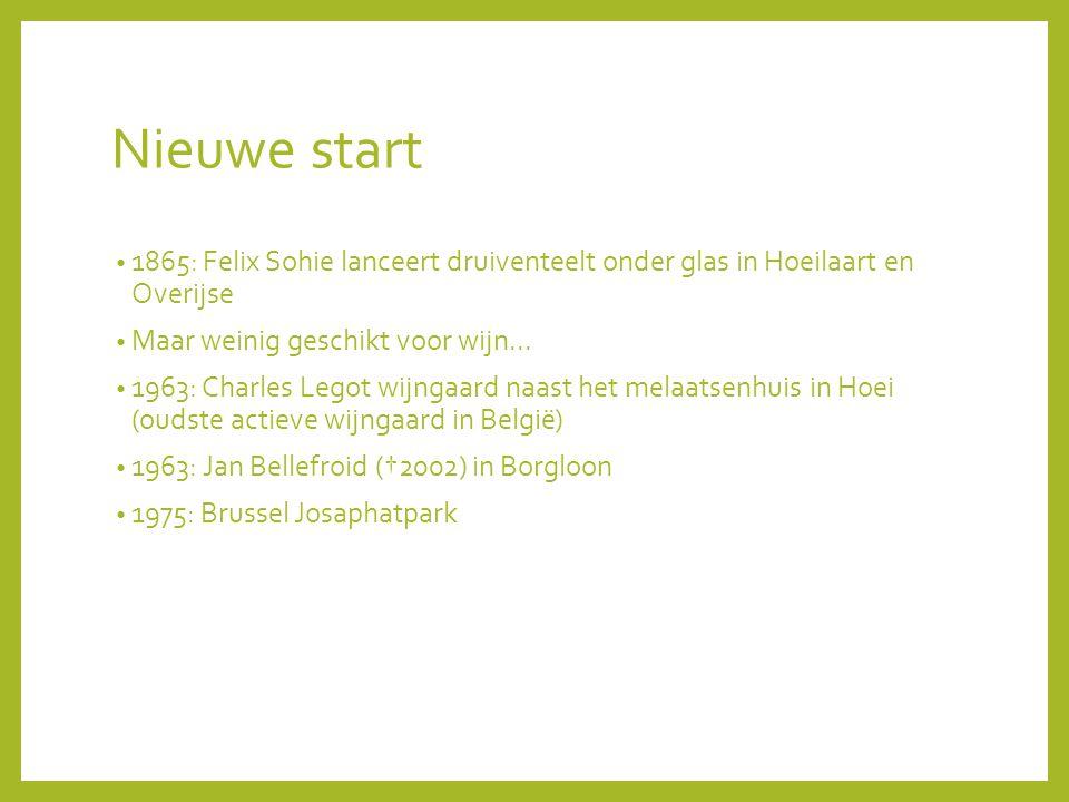 Nieuwe start 1865: Felix Sohie lanceert druiventeelt onder glas in Hoeilaart en Overijse. Maar weinig geschikt voor wijn...