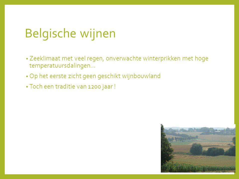Belgische wijnen Zeeklimaat met veel regen, onverwachte winterprikken met hoge temperatuursdalingen...