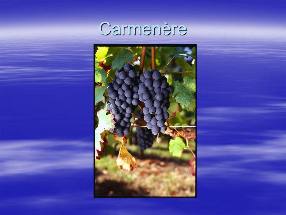 Carmenère