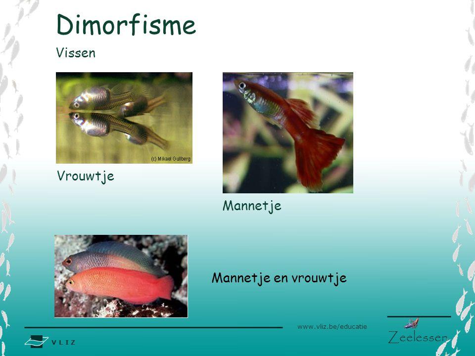 Dimorfisme Vissen Vrouwtje Mannetje Mannetje en vrouwtje