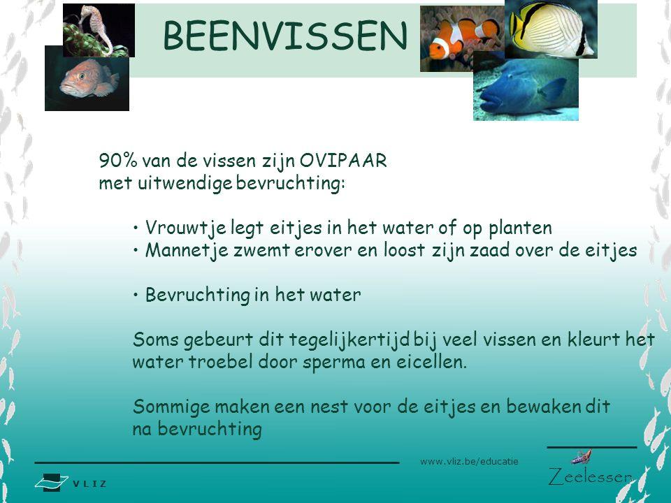 BEENVISSEN 90% van de vissen zijn OVIPAAR met uitwendige bevruchting: