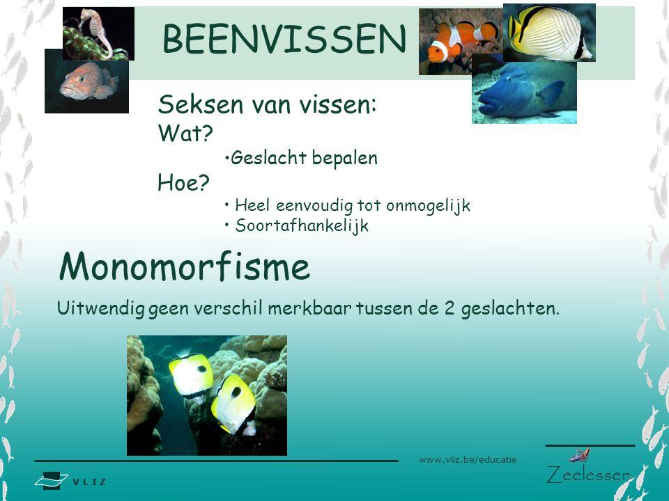 BEENVISSEN Monomorfisme Seksen van vissen: Wat Hoe Geslacht bepalen