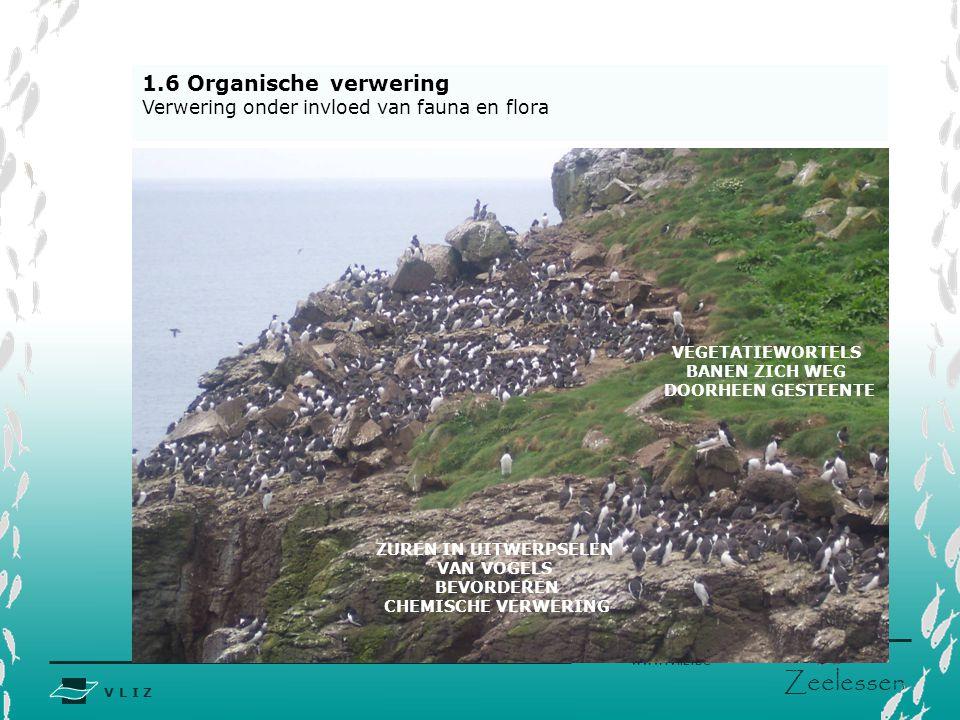 1.6 Organische verwering Verwering onder invloed van fauna en flora