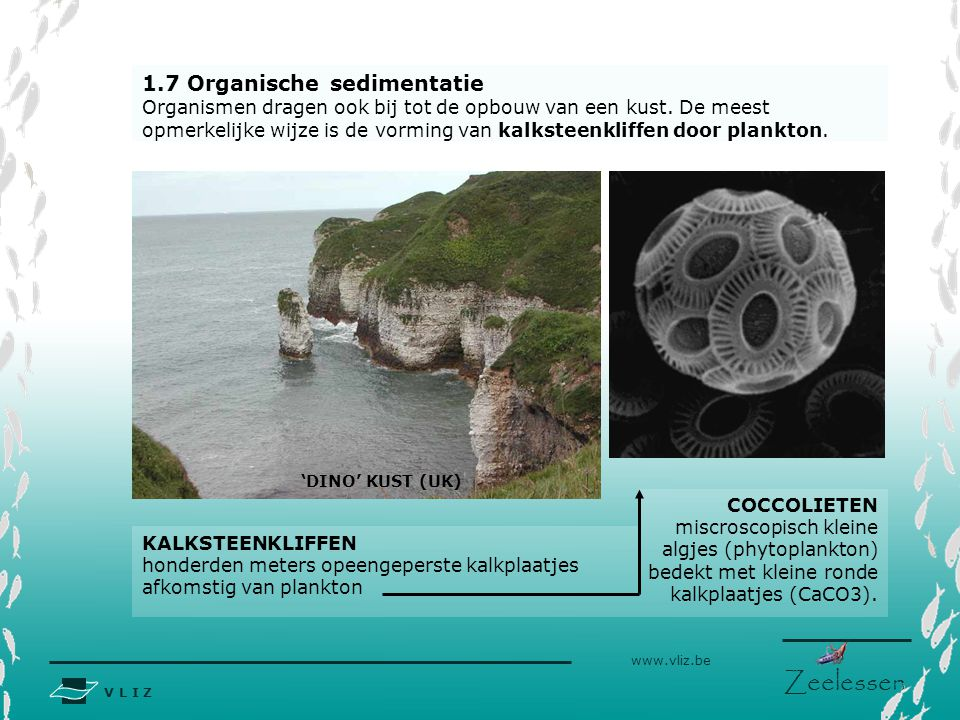 1.7 Organische sedimentatie